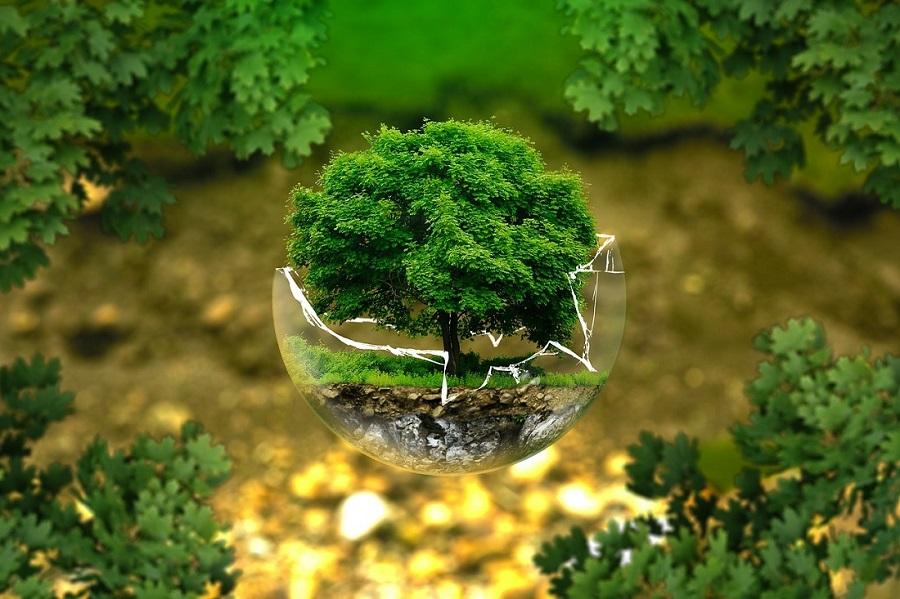 Reconditionnés - Onedirect et Reforest'Action